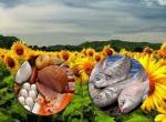 Foto Tarım, Gıda ve Balık